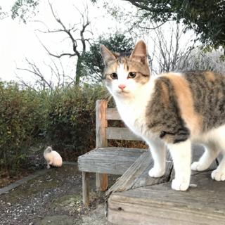 可愛いい子猫、2匹里親募集‼︎
