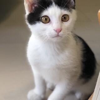 ★人に甘え猫同士とはフレンドリー【プチくん】