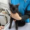【急募】1月31日リリース!甘えん坊な黒猫
