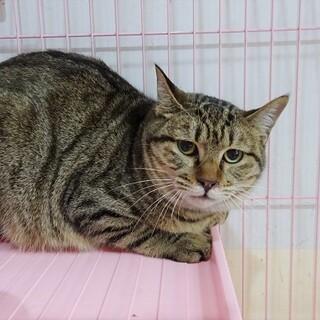 倉庫猫oku 急募 TNR予定のこの子に幸せを