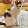 2kGしかない小柄なお母さん猫 サムネイル2