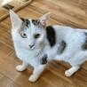 2kGしかない小柄なお母さん猫 サムネイル5