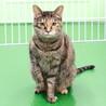 譲渡対象猫の紹介です(C201014-2)