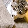 保護猫 最期6〜8ヶ月