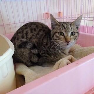 【急募】1月31日リリース!ガリガリに痩せた子猫