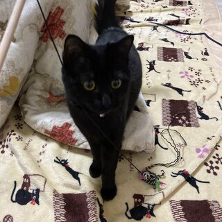 雑種 黒猫の女の子