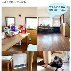 猫の遊び場拡張予定