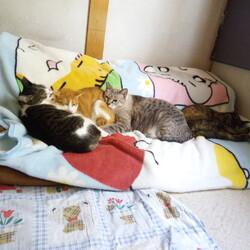 「家に生きる猫」サムネイル1