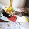 家に生きる猫