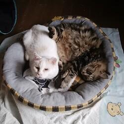 「家に生きる猫」サムネイル2