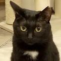 人見知りだけどおもちゃ大好きな黒猫『クロッキー』