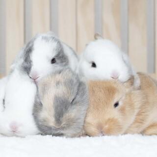 ミニウサギの5兄妹