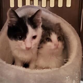 急募!小さな子猫生後2カ月半