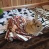 非営利団体保護猫支援ohana