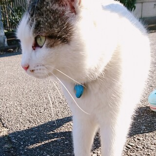 【急募】捨てられ猫ちゃん