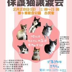 第13回保護猫譲渡会in山口県