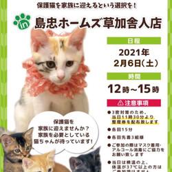 保護猫譲渡会@島忠ホームズ草加舎人店