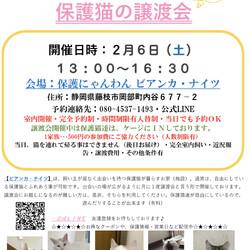【緊急開催】保護猫沢山の譲渡会(予約制)