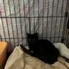 人が大好きな黒猫ルビ、トライアル決定 サムネイル5