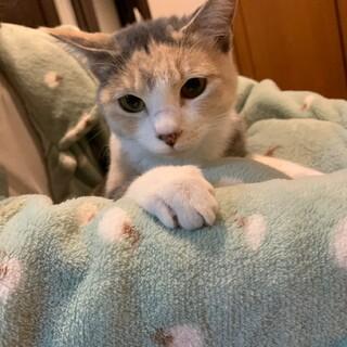 決定☆デレデレのお膝大好き猫