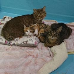 犬と猫の里親探し会に参加するニャンコ3匹