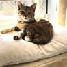毛色が珍しい美猫リンリン♪   サムネイル5