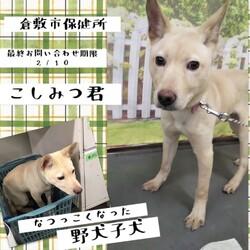 倉敷、2/10最終お問い合わせ期限→全頭譲渡決定!