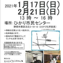 ねこのWa猫譲渡会 静岡市葵区
