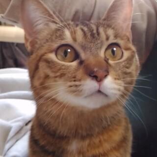 信頼度№1.猫がオーナーの「お見合い会」ルビー