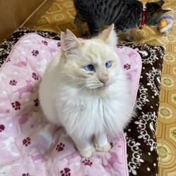 エイズ陽性の白猫 レオンがトライアルに!