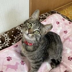 保護子猫が正式譲渡になりました❗️