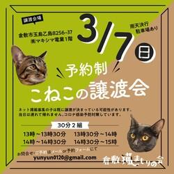 ほごっこ子猫の譲渡会(予約制)