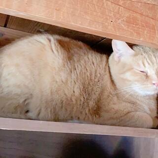 【緊急】大阪吹田市の30匹以上の猫達を助けたい!