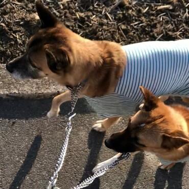 ある日のお散歩 Ed&Lulu