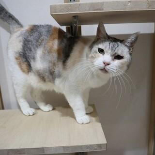 とっても人懐っこいシニア猫さんです