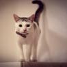 里親さん決定 ☆世界一幸せな猫になります☆