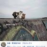 海沿いで暮らすおばあちゃん猫 きんぴらちゃん サムネイル2