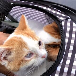【2/28家族決定】保護子猫★和歌山県いっこ&アン