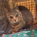 噛む猫の飼育経験者求む!