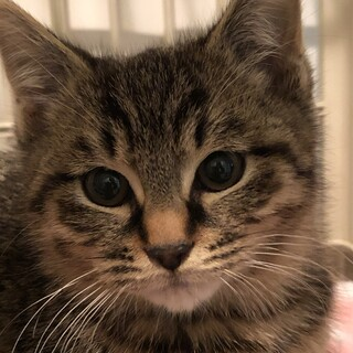 モコモコの可愛い子猫です❤️