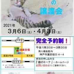 猫の譲渡会in灘 サムネイル1