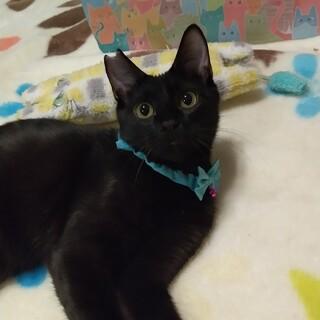 おめめクリクリ 黒猫 ろろんくん(*^^*)