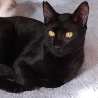 しっぽの長い黒色猫8か月
