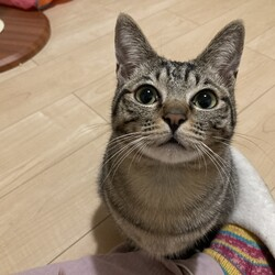 長崎県央犬と猫の会 譲渡会