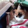 先住と新入り猫への対応。