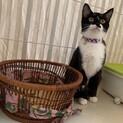 黒白子猫 クーパーちゃん 里親様募集♡