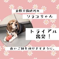 緊張の二日間・・→ソラコちゃん、ロイ君、譲渡決定!