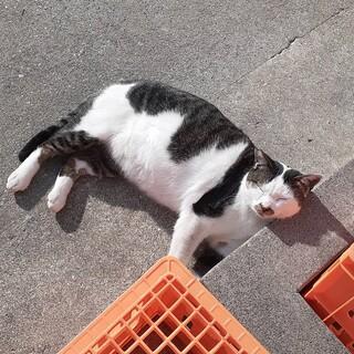 高速道路のパーキングエリアにいる猫さんです