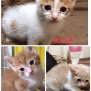 現在1か月の子猫たち