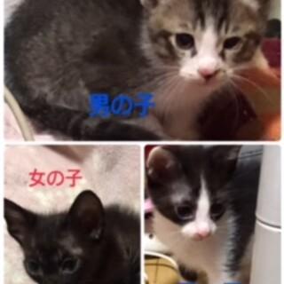 現在2か月の子猫たち